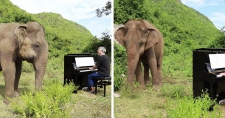 >Blind Elephant Starts To Dance Once She Hears The Pianist Playing To Comfort Her